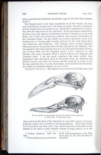 Image of Darwin-F878.1-1868-00282