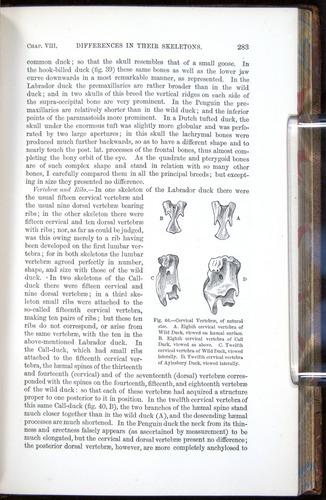 Image of Darwin-F878.1-1868-00283