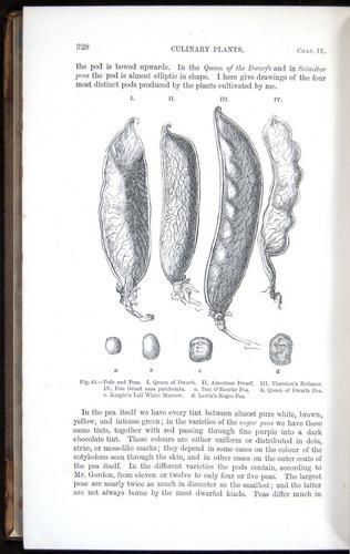 Image of Darwin-F878.1-1868-00328