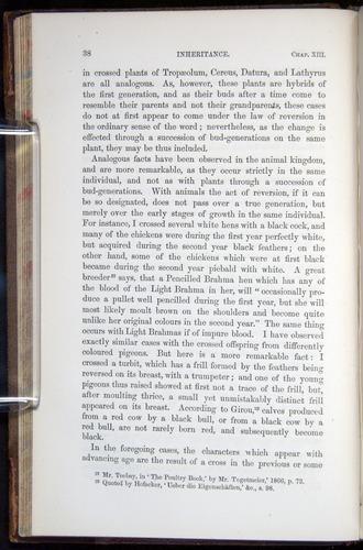 Image of Darwin-F878.2-1868-00038