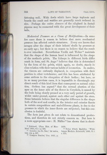 Image of Darwin-F878.2-1868-00344