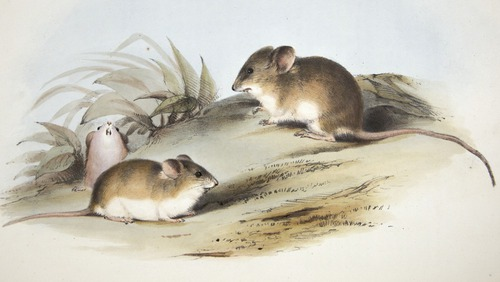 Charles Darwin, Zoology of H.M.S. Beagle (1838-1843)