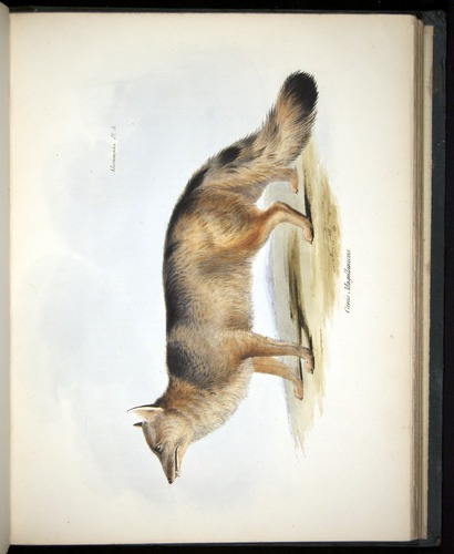Image of Darwin-F8.1-1838-z0010-f05-c