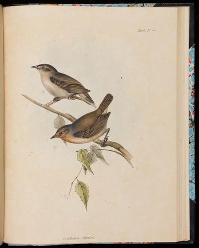 Image of Darwin-F8.2-1838-00106-af44