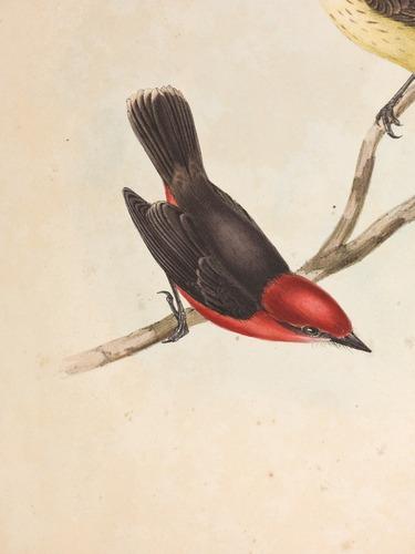 Image of Darwin-F8.2-1838-zzzzzz-det-00044-bxf07-4