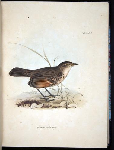 Image of Darwin-F8.2-1838-000052-af11