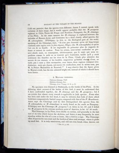 Image of Darwin-F8.2-1838-00014