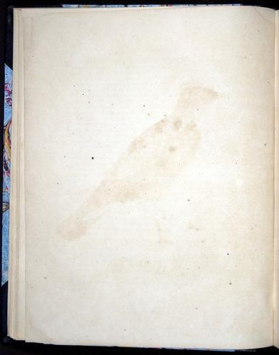 Image of Darwin-F8.2-1838-00018-bf01