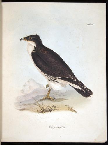 Image of Darwin-F8.2-1838-00018-f1