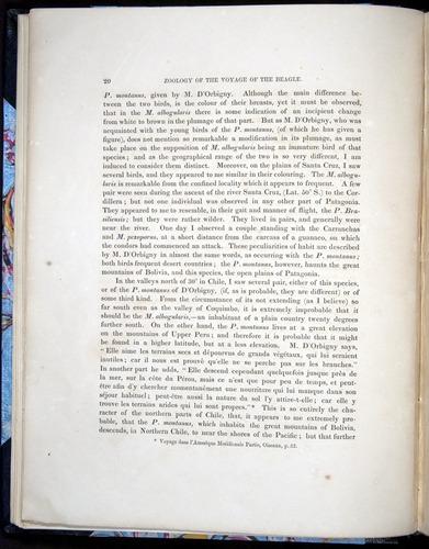 Image of Darwin-F8.2-1838-00020