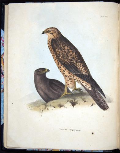 Image of Darwin-F8.2-1838-00022-f02