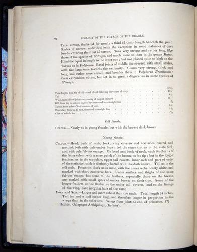 Image of Darwin-F8.2-1838-00024