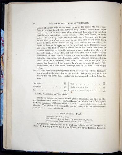Image of Darwin-F8.2-1838-00030