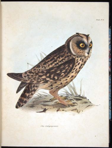 Image of Darwin-F8.2-1838-00032-f03