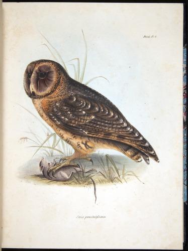 Image of Darwin-F8.2-1838-00034-f04