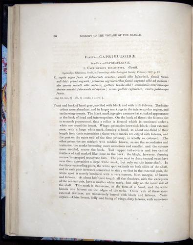 Image of Darwin-F8.2-1838-00036