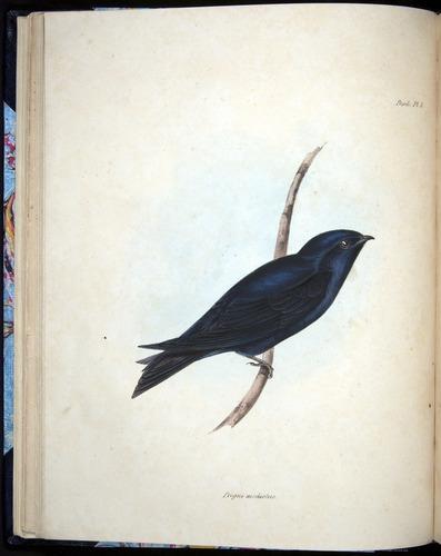 Image of Darwin-F8.2-1838-00038-f05