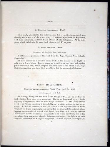 Image of Darwin-F8.2-1838-00041