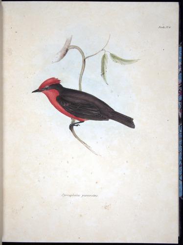 Image of Darwin-F8.2-1838-00044-af06