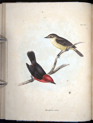 Image of Darwin-F8.2-1838-00044-bxf07