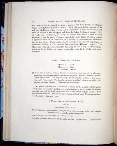Image of Darwin-F8.2-1838-00044