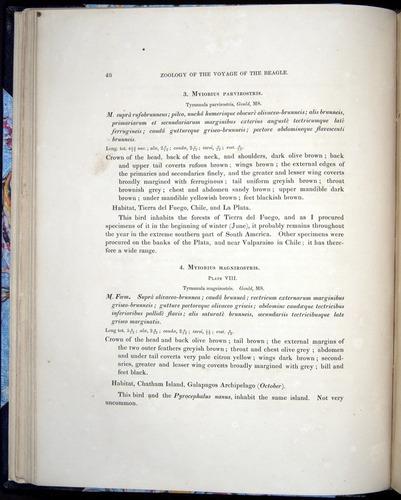 Image of Darwin-F8.2-1838-00048