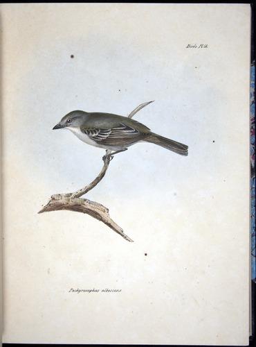 Image of Darwin-F8.2-1838-00050-af09