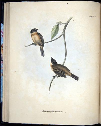 Image of Darwin-F8.2-1838-00050-bf10