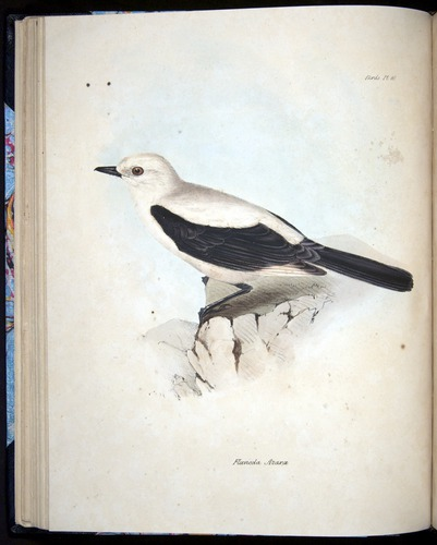 Image of Darwin-F8.2-1838-00052-bf12