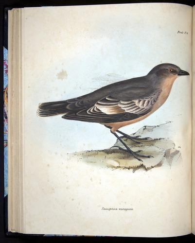Image of Darwin-F8.2-1838-00054-f13