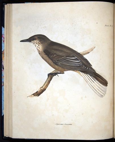 Image of Darwin-F8.2-1838-00056-bf15