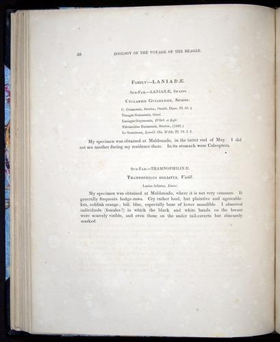 Image of Darwin-F8.2-1838-00058