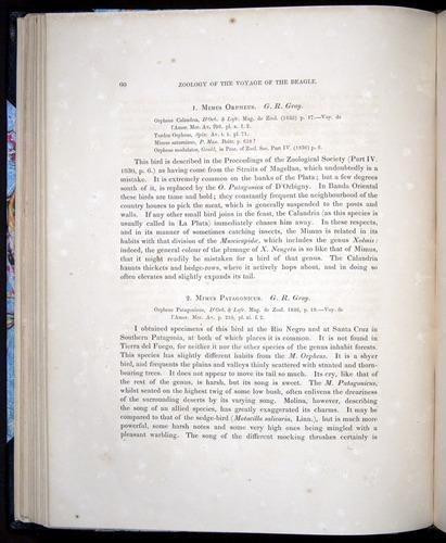 Image of Darwin-F8.2-1838-00060