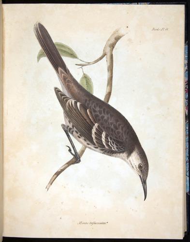 Image of Darwin-F8.2-1838-00062-af16