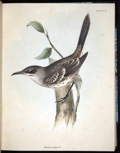 Image of Darwin-F8.2-1838-00062-bf17