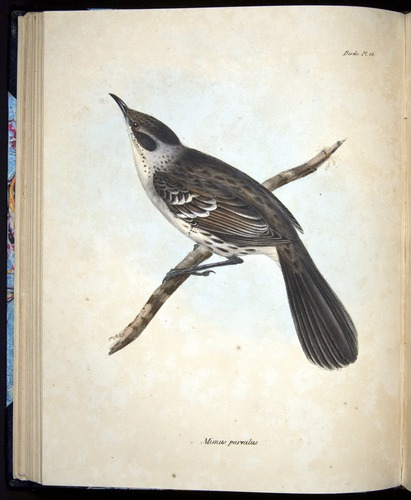 Image of Darwin-F8.2-1838-00062-cf18