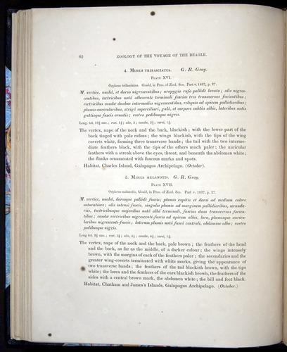 Image of Darwin-F8.2-1838-00062