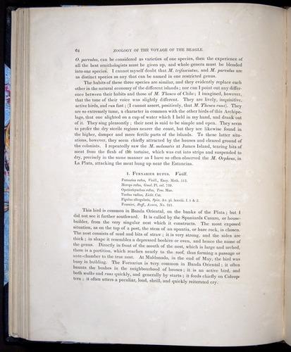 Image of Darwin-F8.2-1838-00064