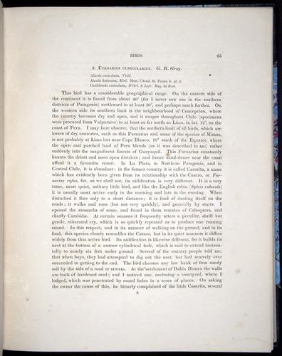 Image of Darwin-F8.2-1838-00065