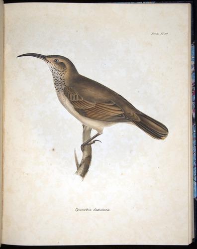 Image of Darwin-F8.2-1838-00066-f19
