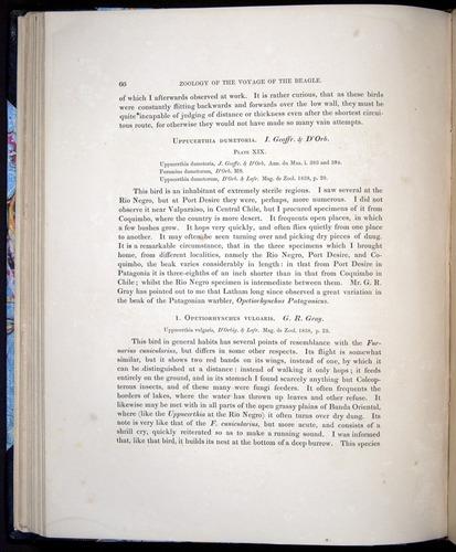 Image of Darwin-F8.2-1838-00066