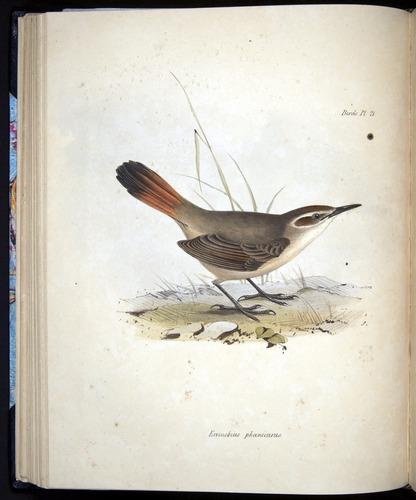 Image of Darwin-F8.2-1838-00068-bf21