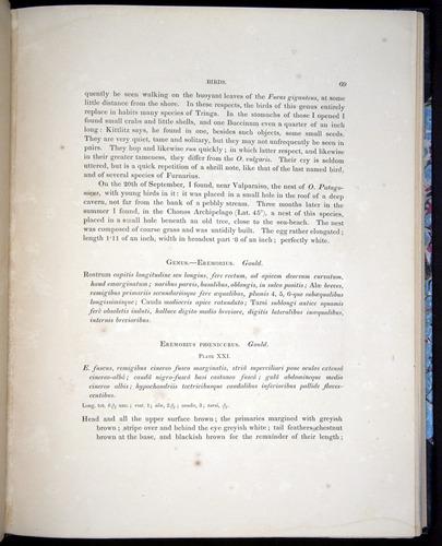 Image of Darwin-F8.2-1838-00069