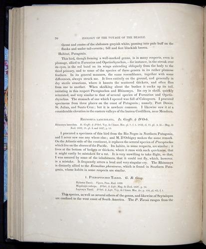 Image of Darwin-F8.2-1838-00070