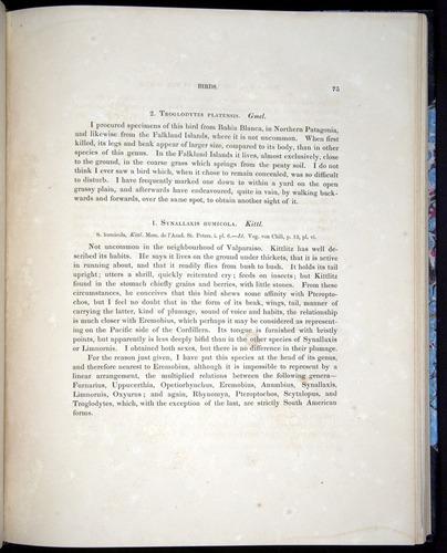 Image of Darwin-F8.2-1838-00075