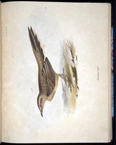Image of Darwin-F8.2-1838-00076-af22