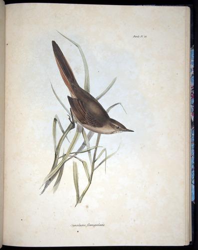 Image of Darwin-F8.2-1838-00078-f24