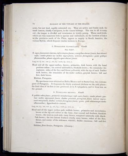 Image of Darwin-F8.2-1838-00078