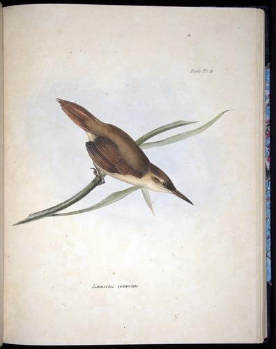 Image of Darwin-F8.2-1838-00080-af25