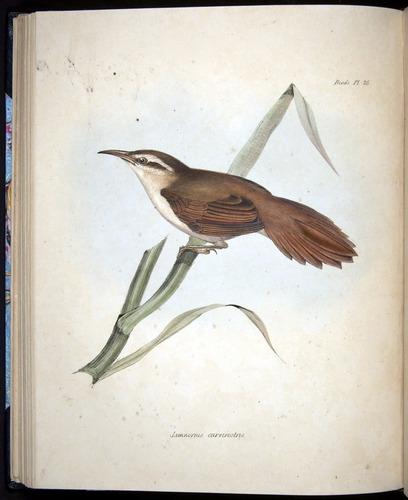 Image of Darwin-F8.2-1838-00080-bf26